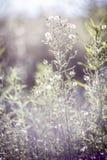 Groene gras en bloemen Zonsondergang, August Walking in de weide royalty-vrije stock fotografie