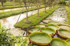 Groene gras en bomen royalty-vrije stock afbeeldingen