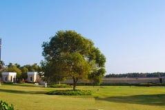 Groene gras en boom Stock Afbeelding