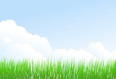 Groene gras en hemel Royalty-vrije Stock Fotografie