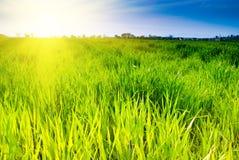 Groene gras en hemel Royalty-vrije Stock Afbeelding