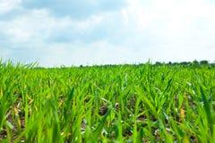 Groene Gras en hemel met wolken royalty-vrije stock foto's