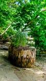 Groene Gras en Installaties die bovenop een Dode Boomboomstam groeien die Nodig Voedingsmiddelen van de Decompositie van de Geval royalty-vrije stock afbeelding