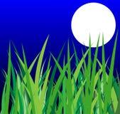 Groene gras en maan op een achtergrondnachthemel Stock Foto