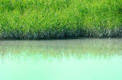 Groene gras en rivier Stock Foto's