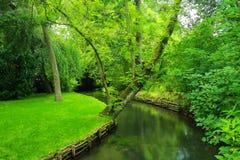 Groene gras en stroom Stock Foto's