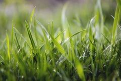 Groene gras en waterdalingen na regen Stock Foto