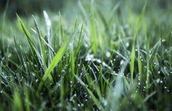 Groene gras en waterdalingen na regen Stock Afbeeldingen