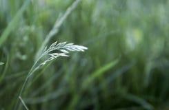Groene gras en waterdalingen na regen Royalty-vrije Stock Afbeelding