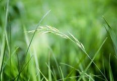 Groene gras en waterdalingen na regen Royalty-vrije Stock Foto