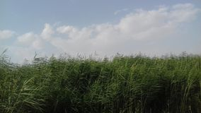 Groene gras en wolken Royalty-vrije Stock Afbeelding