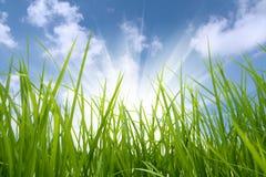 Groene gras en zon Royalty-vrije Stock Afbeeldingen