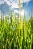 Groene gras fild verticaal Royalty-vrije Stock Afbeeldingen