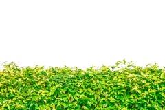 Groene gras geïsoleerde grens voor achtergrond Stock Afbeelding