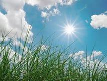 Groene gras, hemel, wolken en zon stock afbeeldingen