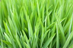 Groene gras mooie natuurlijke achtergrond voor ontwerp stock afbeeldingen