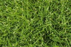 Groene gras naadloze textuur Royalty-vrije Stock Afbeelding