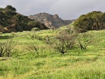 Groene gras pastorale scène stock afbeeldingen