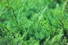Groene grasachtergrond Stock Foto's