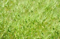 Groene grasachtergrond Royalty-vrije Stock Foto's