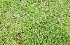 Groene grasachtergrond Royalty-vrije Stock Foto
