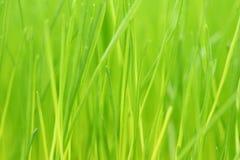 Groene grasachtergrond stock afbeelding