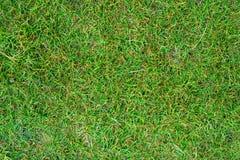 Groene grasachtergrond Royalty-vrije Stock Afbeeldingen