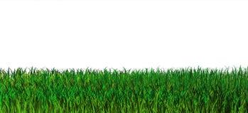 Groene grasachtergrond. Aard Stock Afbeeldingen