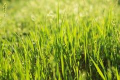 Groene grasachtergrond met selectieve nadruk Stock Foto