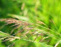 Groene grasachtergrond met zachte nadruk Stock Fotografie