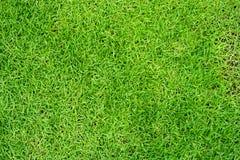 Groene grasachtergrond of groene natuurlijke muurtextuur royalty-vrije stock foto's