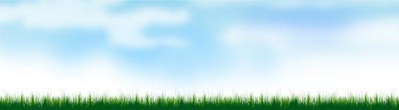 Groene grasachtergrond op de zomertijd stock foto