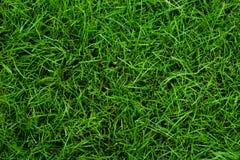 Groene grasachtergronden Stock Foto