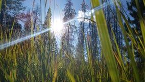 Groene grasdag Royalty-vrije Stock Afbeeldingen