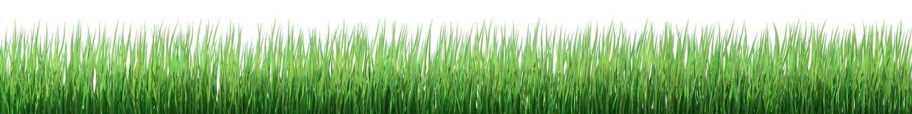 Groene grasgrens royalty-vrije illustratie