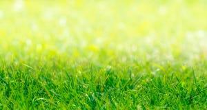 Groene Grasgrens met de Natuurlijke Achtergrond van Defocused Stock Fotografie