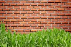 Groene graskromme en brickwall Stock Foto