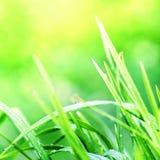 Groene grasmacro als achtergrond Abstracte natuurlijke achtergronden met Stock Afbeeldingen