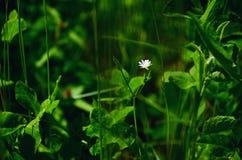 Groene grasrijk Stock Afbeelding