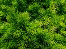 Groene grasrijke achtergrond van één of andere decoratieve installatie Stock Foto
