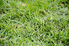 Groene grassen Royalty-vrije Stock Fotografie