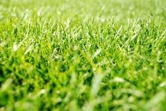 Groene grastextuur Stock Foto