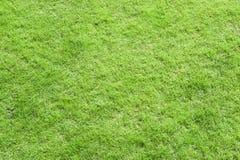Groene grastextuur Stock Afbeelding