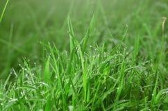 Groene grastextuur als achtergrond Stock Afbeeldingen