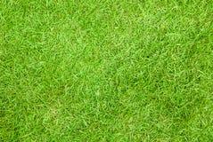 Groene grastextuur als achtergrond Stock Foto