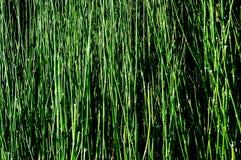 Groene grastextuur als achtergrond Royalty-vrije Stock Afbeeldingen