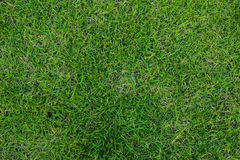 Groene grastextuur als achtergrond Royalty-vrije Stock Fotografie