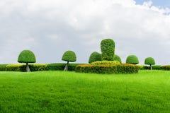 Groene grastextuur en tuin blauwe hemel stock afbeelding