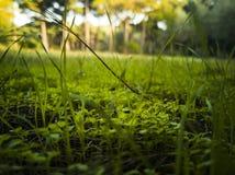 Groene grastextuur natuurlijke als achtergrond, Gazon voor de achtergrondafbeelding royalty-vrije stock foto's