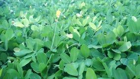 Groene grasuitgestrektheid in het park Groen grasdetail stock video